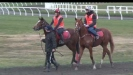 Embedded thumbnail for  How do young trainers get into the racing industry
