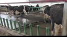 Embedded thumbnail for How NZ dairy stock stack up